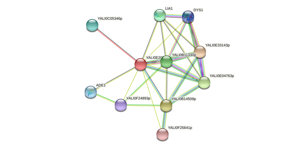 XP_504183.1 protein (Yarrowia lipolytica) - STRING interaction network