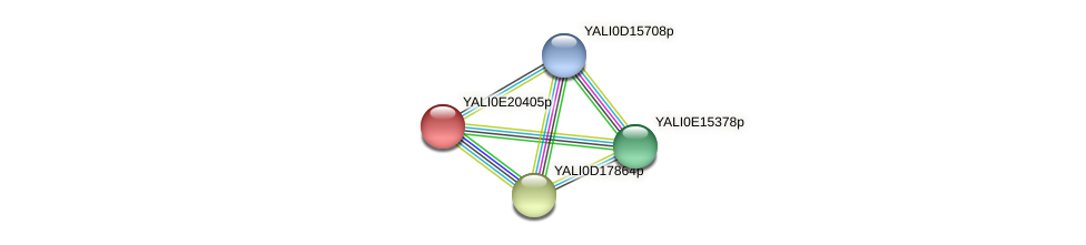 XP_504185.1 protein (Yarrowia lipolytica) - STRING interaction network