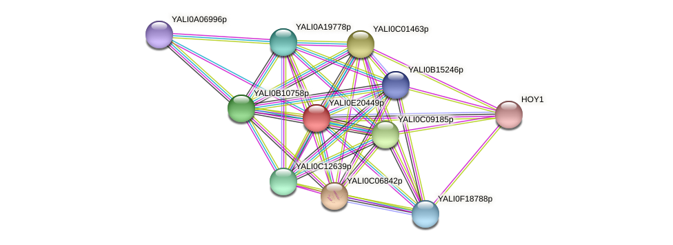 XP_504187.1 protein (Yarrowia lipolytica) - STRING interaction network