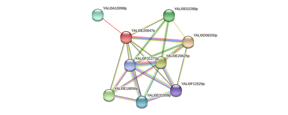 XP_504196.1 protein (Yarrowia lipolytica) - STRING interaction network