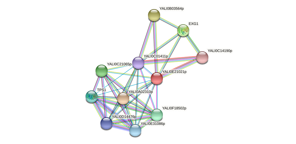 XP_504213.2 protein (Yarrowia lipolytica) - STRING interaction network