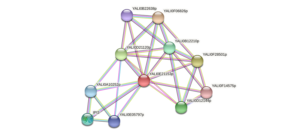 XP_504219.1 protein (Yarrowia lipolytica) - STRING interaction network