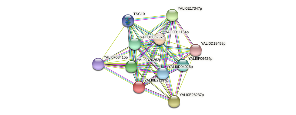 XP_504221.1 protein (Yarrowia lipolytica) - STRING interaction network