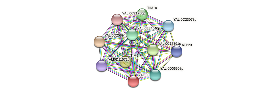 XP_504227.1 protein (Yarrowia lipolytica) - STRING interaction network