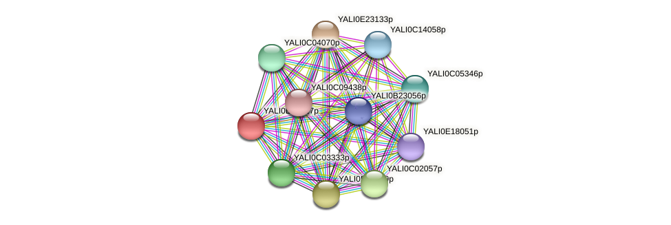 XP_504229.1 protein (Yarrowia lipolytica) - STRING interaction network