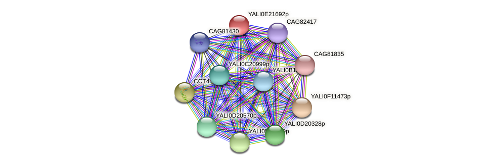 XP_504240.1 protein (Yarrowia lipolytica) - STRING interaction network