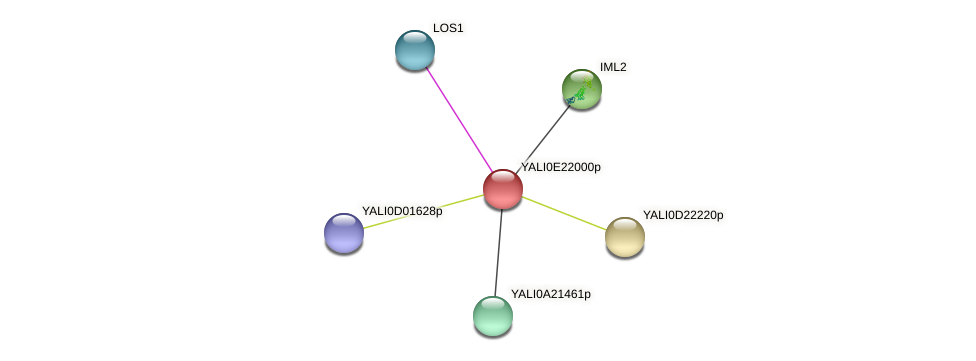 XP_504252.1 protein (Yarrowia lipolytica) - STRING interaction network