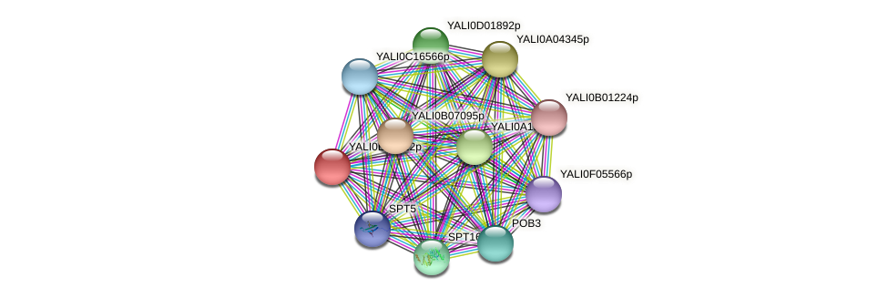 XP_504253.1 protein (Yarrowia lipolytica) - STRING interaction network