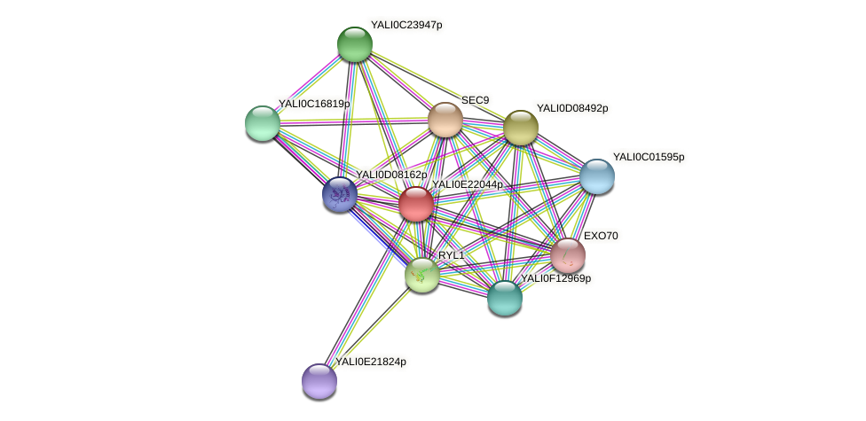 XP_504254.1 protein (Yarrowia lipolytica) - STRING interaction network