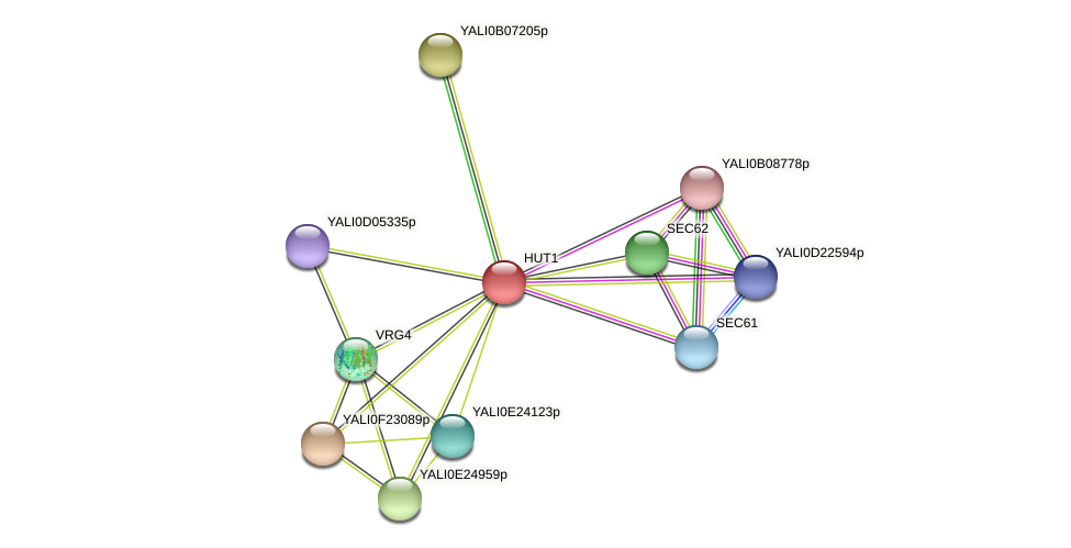 HUT1 protein (Yarrowia lipolytica) - STRING interaction network