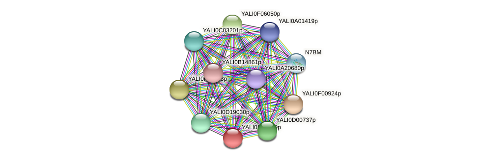 XP_504293.2 protein (Yarrowia lipolytica) - STRING interaction network