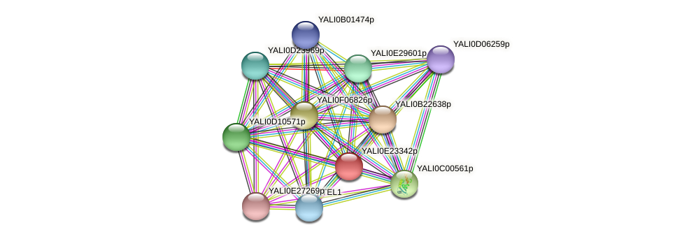 XP_504305.1 protein (Yarrowia lipolytica) - STRING interaction network