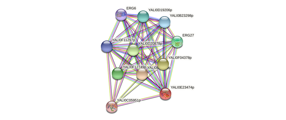 XP_504311.1 protein (Yarrowia lipolytica) - STRING interaction network