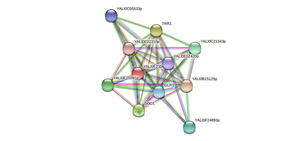 XP_504314.1 protein (Yarrowia lipolytica) - STRING interaction network