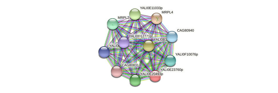 XP_504324.1 protein (Yarrowia lipolytica) - STRING interaction network