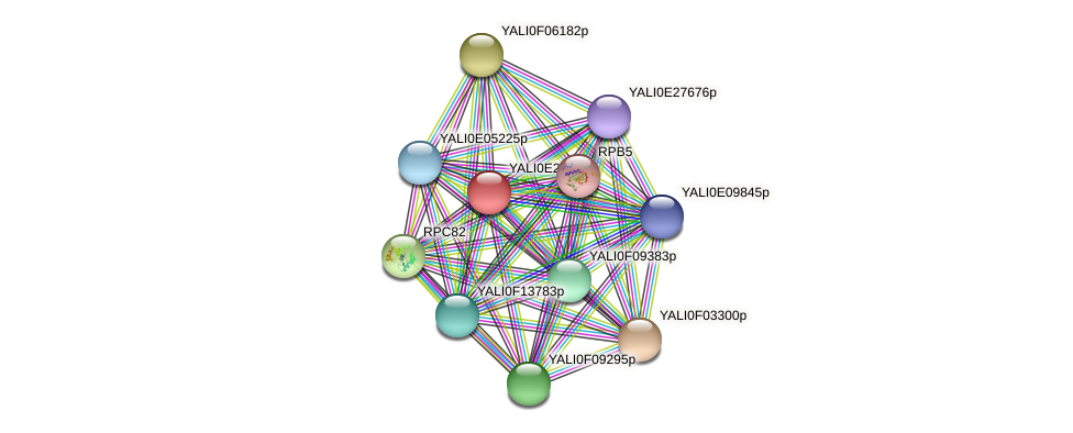 XP_504330.1 protein (Yarrowia lipolytica) - STRING interaction network