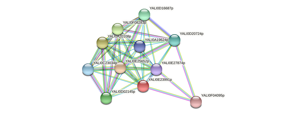 XP_504332.1 protein (Yarrowia lipolytica) - STRING interaction network