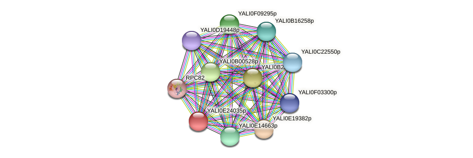 XP_504334.1 protein (Yarrowia lipolytica) - STRING interaction network