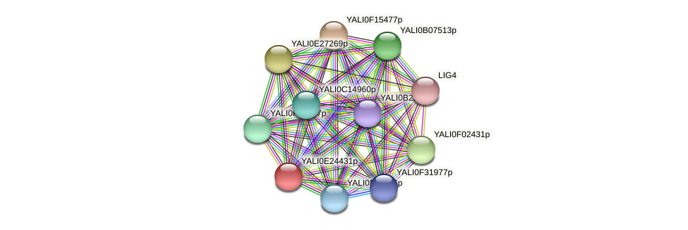 XP_504352.1 protein (Yarrowia lipolytica) - STRING interaction network