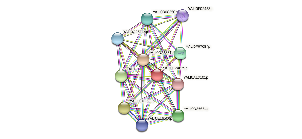 XP_504361.1 protein (Yarrowia lipolytica) - STRING interaction network