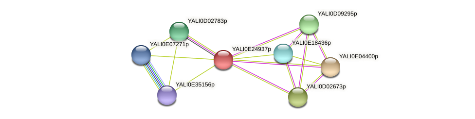 XP_504374.1 protein (Yarrowia lipolytica) - STRING interaction network