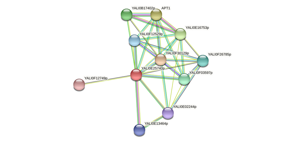 XP_504395.1 protein (Yarrowia lipolytica) - STRING interaction network