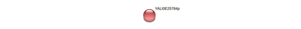 XP_504397.1 protein (Yarrowia lipolytica) - STRING interaction network
