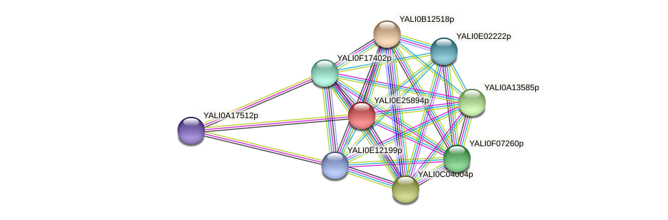 XP_504403.1 protein (Yarrowia lipolytica) - STRING interaction network