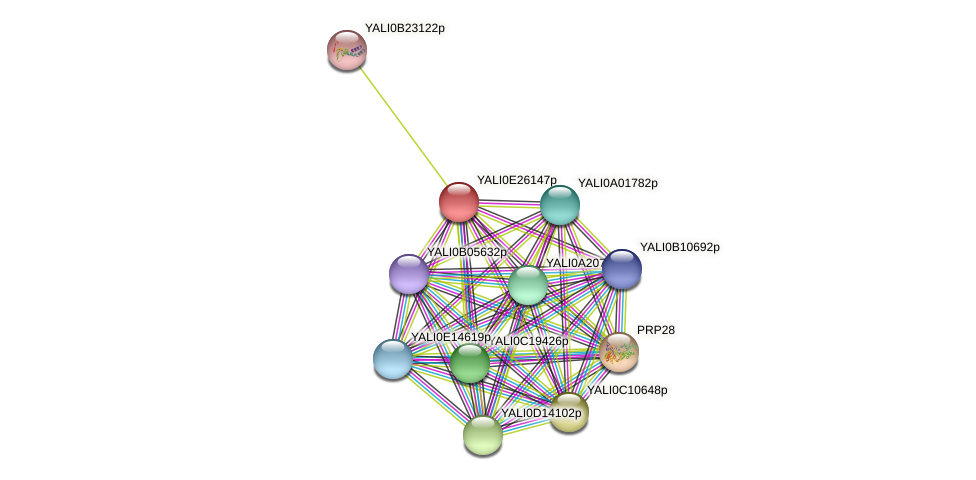 XP_504413.1 protein (Yarrowia lipolytica) - STRING interaction network