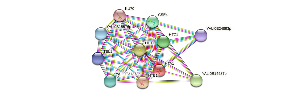 HTA1 protein (Yarrowia lipolytica) - STRING interaction network