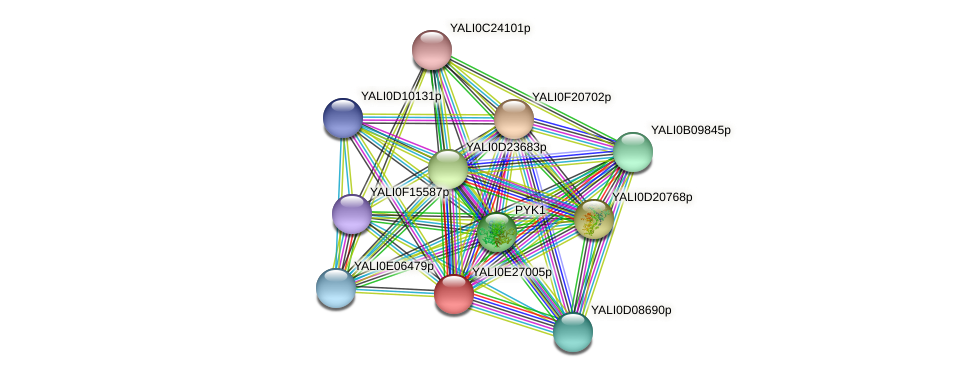 XP_504448.1 protein (Yarrowia lipolytica) - STRING interaction network