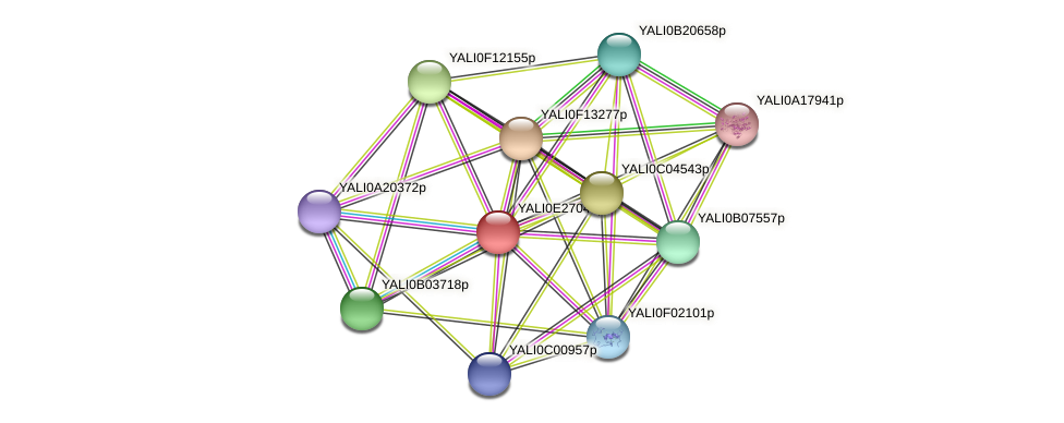 XP_504450.1 protein (Yarrowia lipolytica) - STRING interaction network