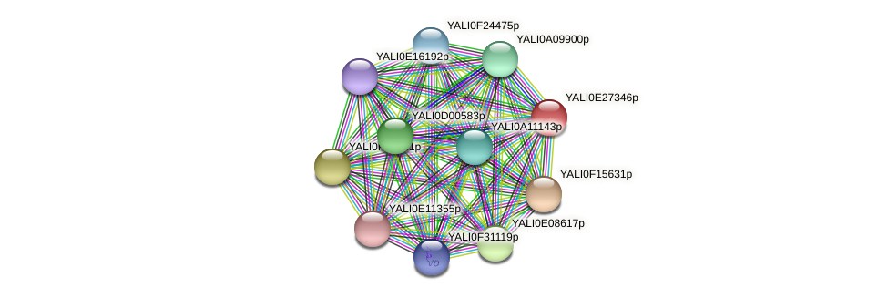 XP_504463.1 protein (Yarrowia lipolytica) - STRING interaction network