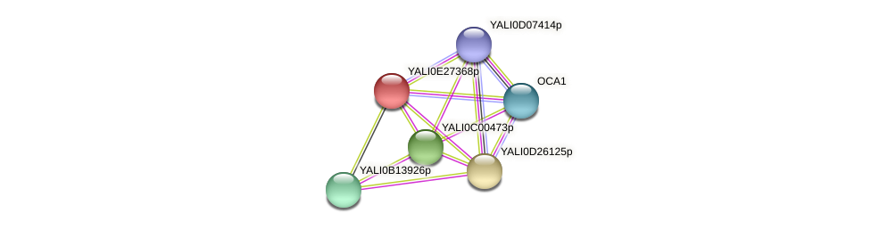 XP_504464.1 protein (Yarrowia lipolytica) - STRING interaction network