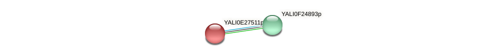 XP_504471.1 protein (Yarrowia lipolytica) - STRING interaction network