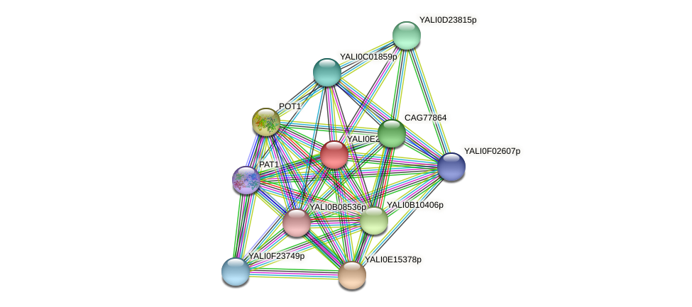 XP_504475.1 protein (Yarrowia lipolytica) - STRING interaction network