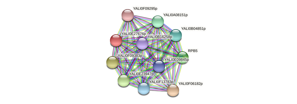 XP_504476.1 protein (Yarrowia lipolytica) - STRING interaction network