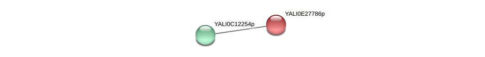 XP_504482.1 protein (Yarrowia lipolytica) - STRING interaction network