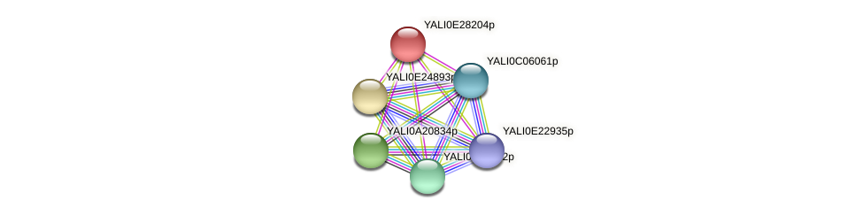 XP_504495.1 protein (Yarrowia lipolytica) - STRING interaction network