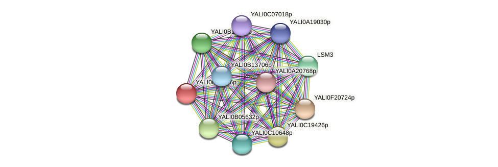 XP_504496.1 protein (Yarrowia lipolytica) - STRING interaction network
