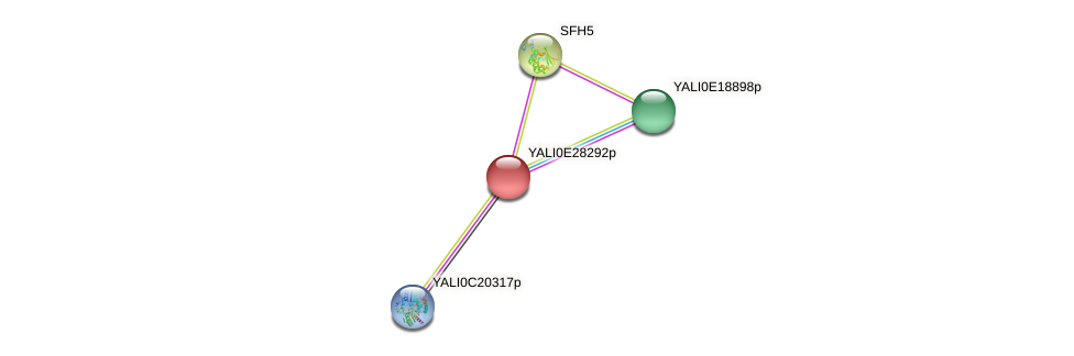XP_504500.1 protein (Yarrowia lipolytica) - STRING interaction network