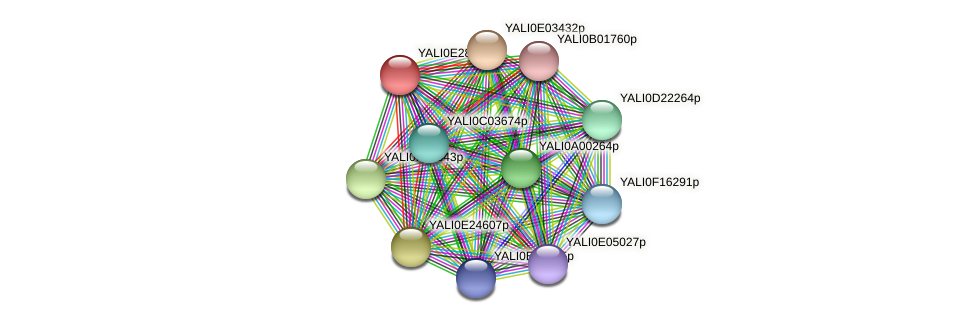 XP_504508.1 protein (Yarrowia lipolytica) - STRING interaction network