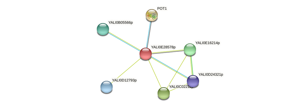 XP_504514.1 protein (Yarrowia lipolytica) - STRING interaction network
