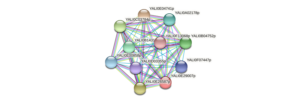 XP_504532.1 protein (Yarrowia lipolytica) - STRING interaction network