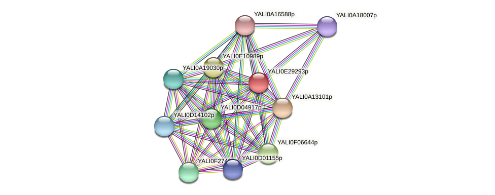 XP_504544.2 protein (Yarrowia lipolytica) - STRING interaction network
