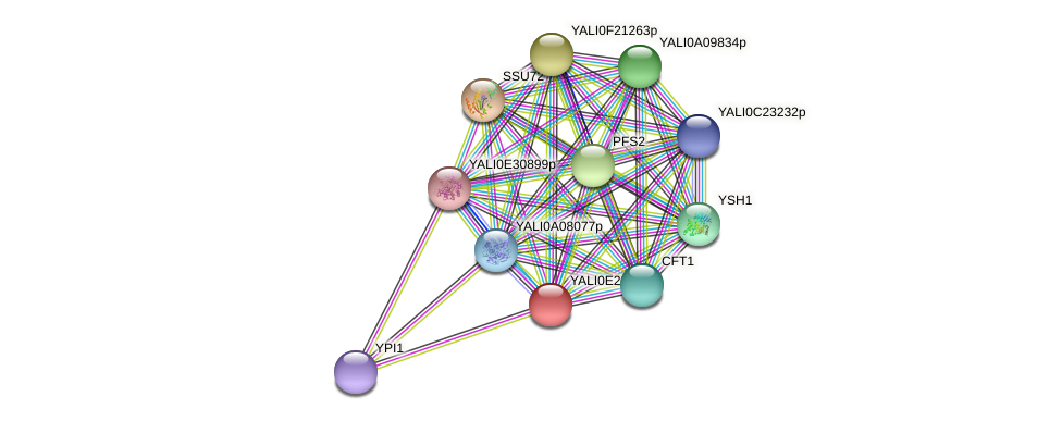 XP_504545.1 protein (Yarrowia lipolytica) - STRING interaction network