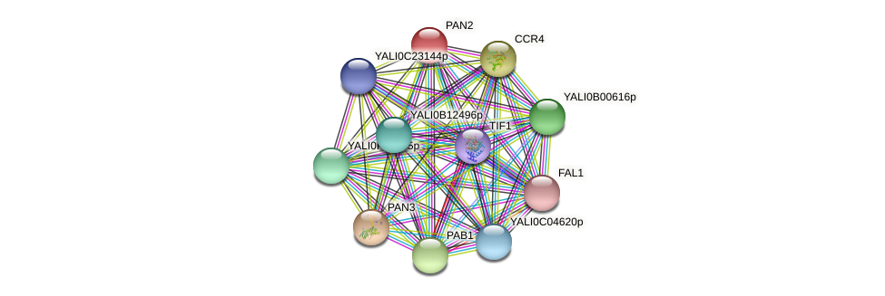 PAN2 protein (Yarrowia lipolytica) - STRING interaction network