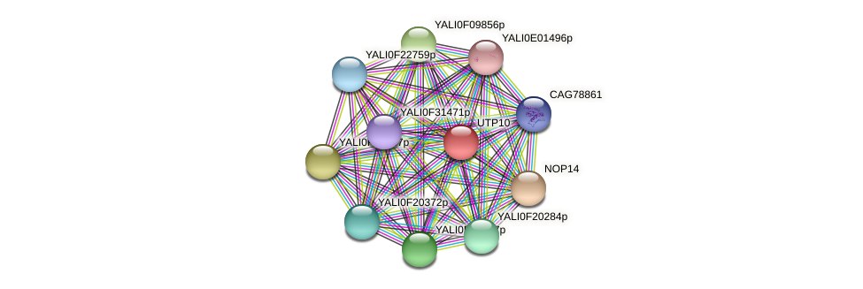 UTP10 protein (Yarrowia lipolytica) - STRING interaction network