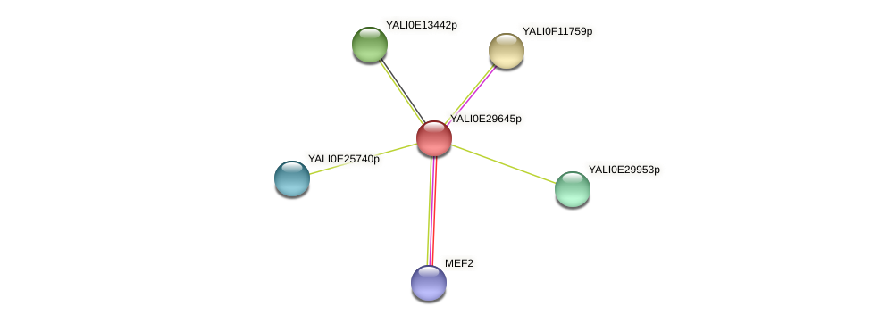 XP_504561.1 protein (Yarrowia lipolytica) - STRING interaction network