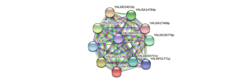 XP_504562.2 protein (Yarrowia lipolytica) - STRING interaction network
